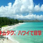 木村拓哉をハワイで2016年も目撃?工藤静香や子供も?画像は?